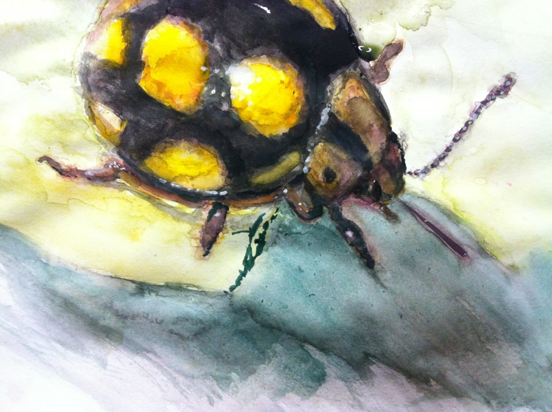 Bug by zareah