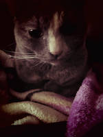 Hazel Cat Dark by redryu82