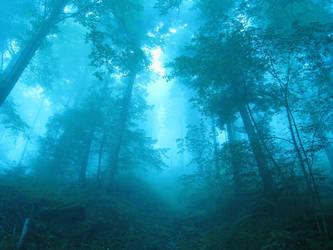 Magic Forest by kkeman