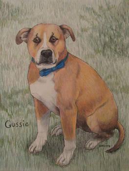 Gussie bowtie