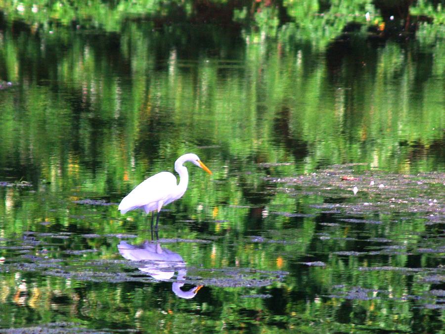 Monets Egret by davincipoppalag