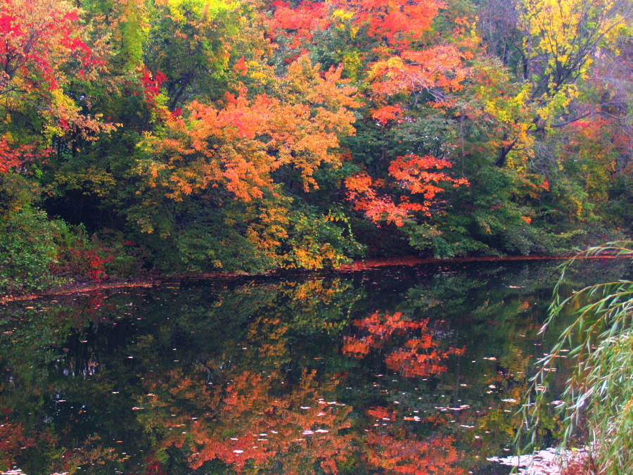 Autumn On The Mianus River by davincipoppalag