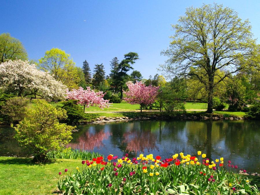 Binney Park in Spring by davincipoppalag