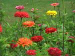 Pretty flowers 3 by davincipoppalag