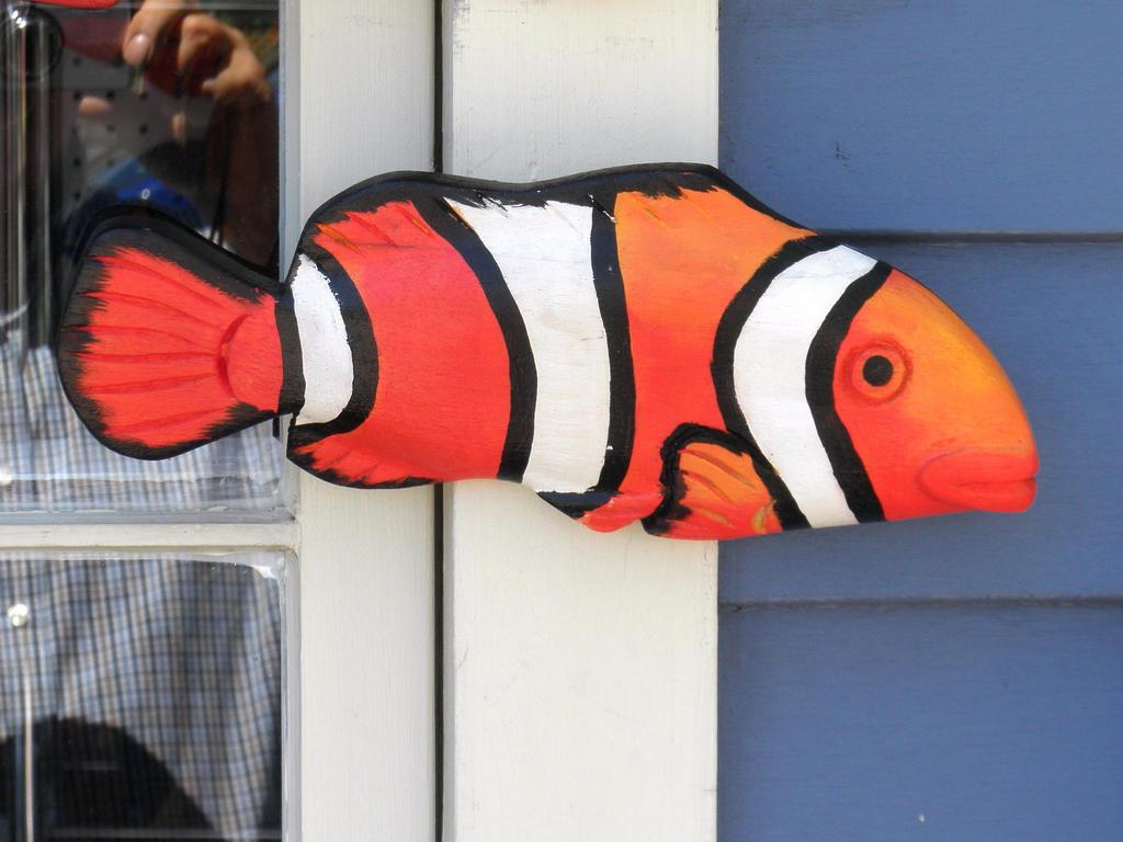 I found Nemo again.... by davincipoppalag