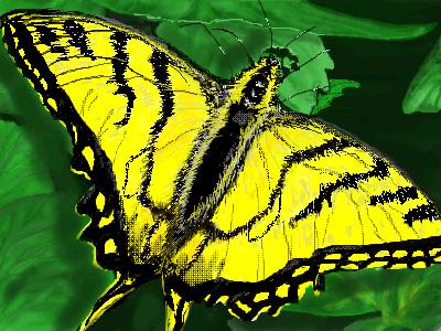 Flutterby by davincipoppalag
