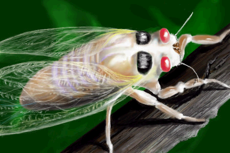 Seventeen-year Cicada by davincipoppalag