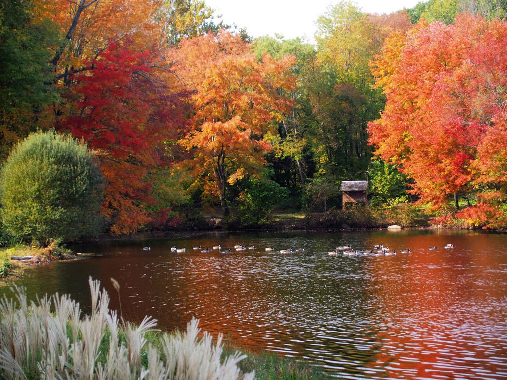 Autumn 3 by davincipoppalag