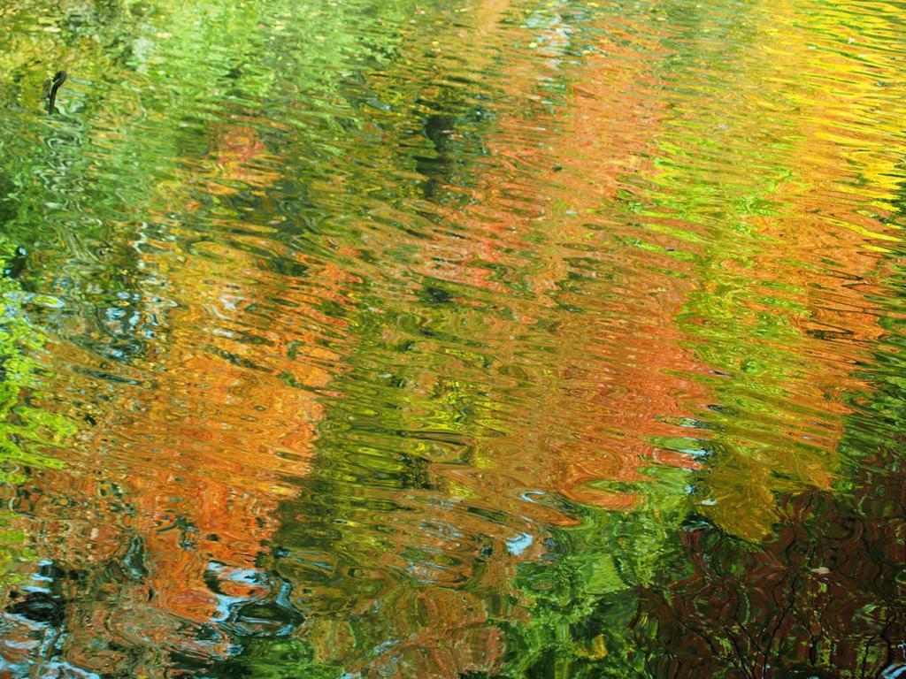 Autumns Abstract