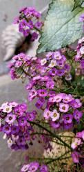 Little Purple flowers by davincipoppalag