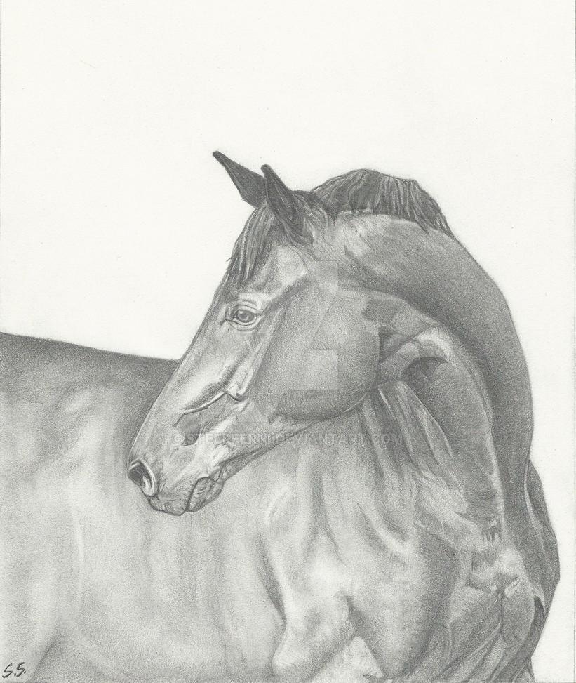 Horse by Steerferni