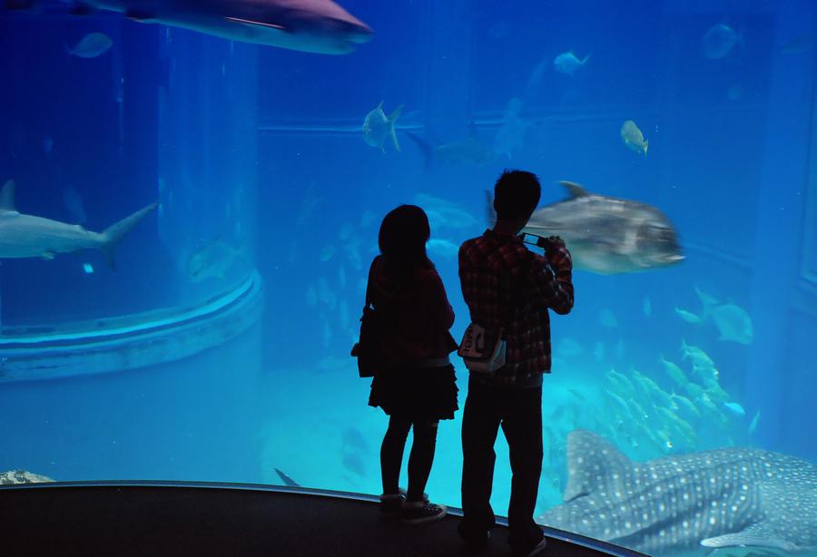 Aquarium by kadavra9