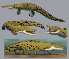 Croctober, Nile Crocodiles