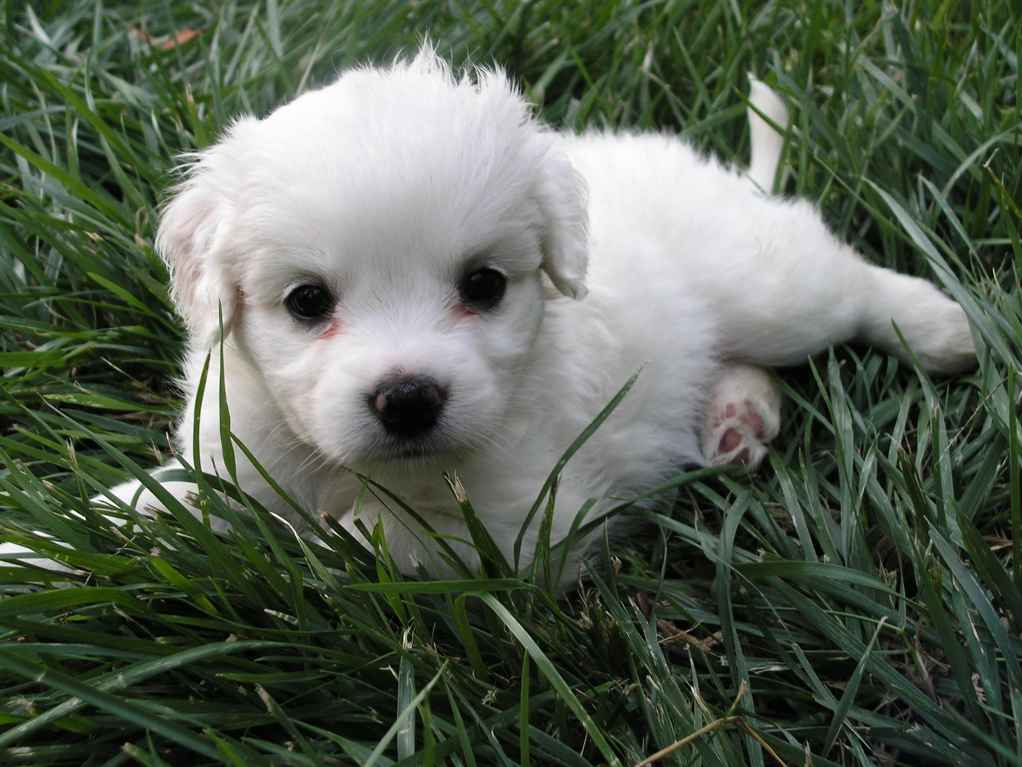 Los perritos mas lindos