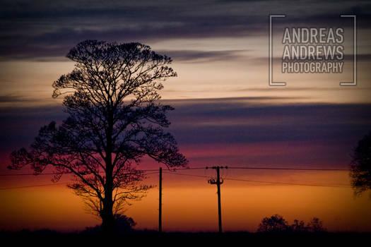 Electric tree silhouette sky