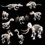 Spore Skeletons