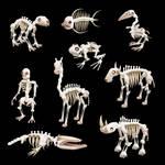 Spore Skeletons II