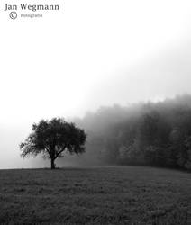 In The Fog 3 by Herbsthauch