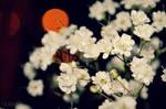Tiny White Flowers by Kellyx96