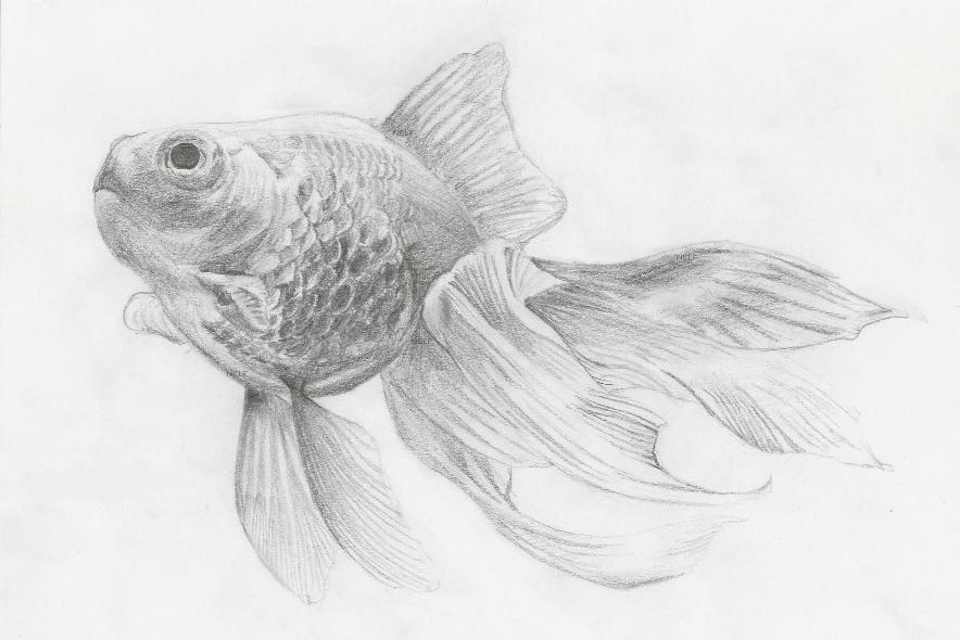 Fish sketch by nelf on deviantart for How to fish