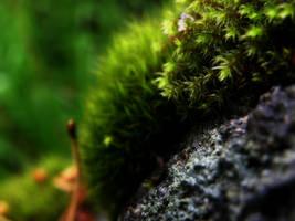 Moss by Mikkoliini