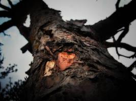 Puu by Mikkoliini