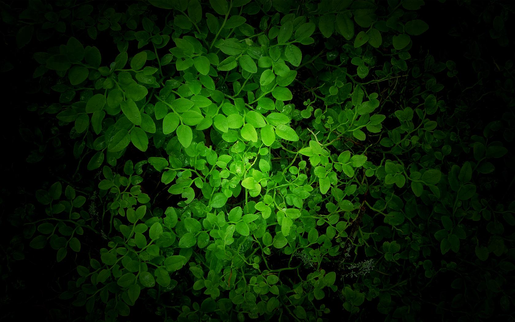 Green Wallpaper By Mikkoliini