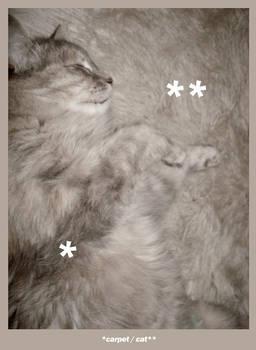 carpetcat