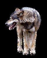Wolfcutout by RAYNExstorm