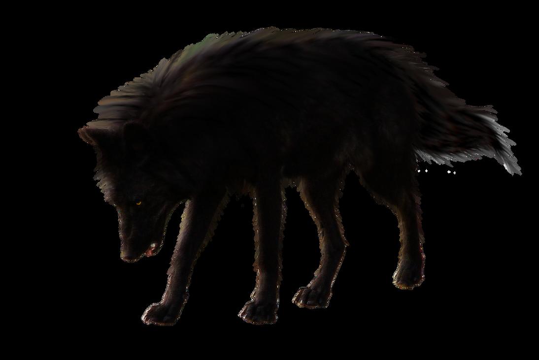 صور ذيب صور ذئاب سكرابز ذئاب صور ذيب مفرغة صور blackwolf_by_raynexstorm-d7kxkbp.png