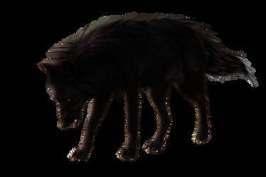 BlackWolf by RAYNExstorm