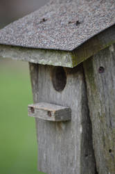 Old Bird House Close Up by RAYNExstorm