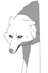 Shy wolf base