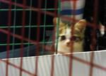 Jail House Cat