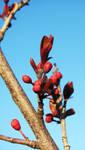 Budding Blossoms