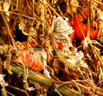 Past Harvest Time