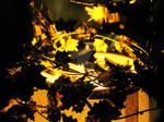 Cauldron of Gold I