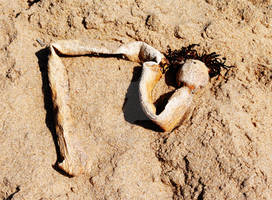 Sand Naga