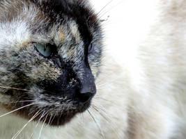 Cat by beforethenight