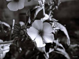 Flower by beforethenight