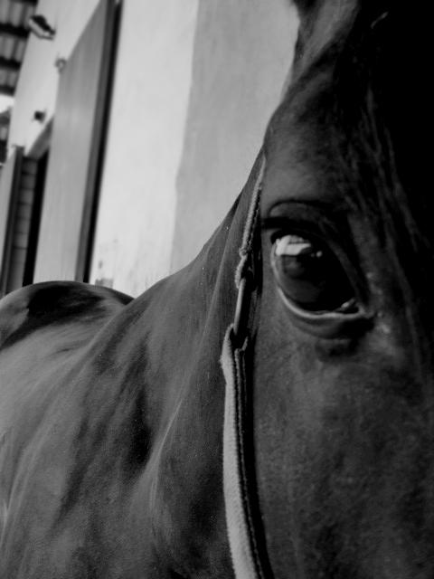Horse. by beforethenight