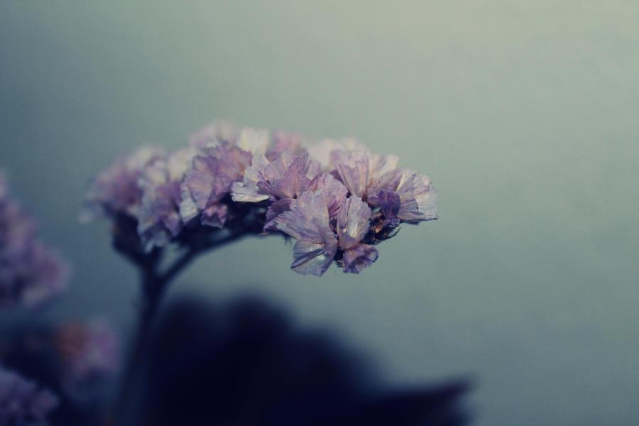 Pink flower. by beforethenight