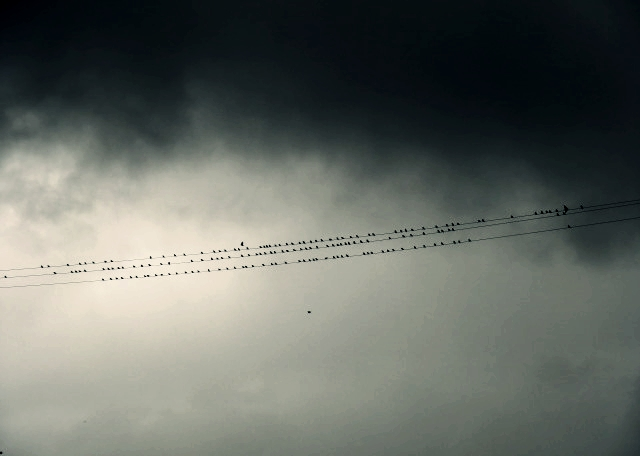 Birds.. by beforethenight