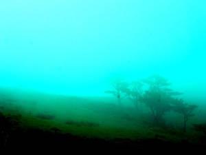 Mist, again.