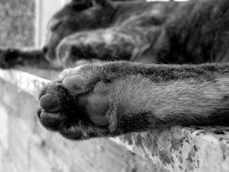 Cat sleeping by beforethenight