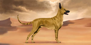 369 I RRSNK's Fastest Canine Alive