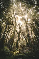 Mes racines ce sont les arbres by Julieoftheworldtree