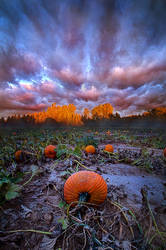 Once Upon A Pumpkin Time