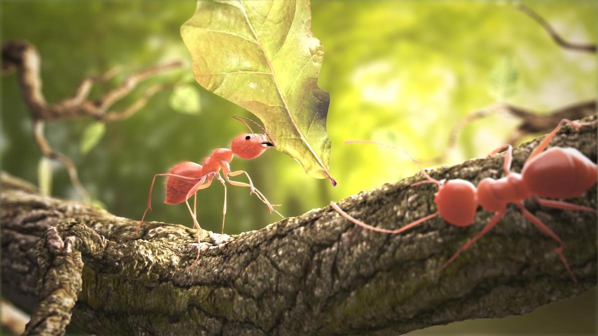 Ant: Dinner..!! by pavolsvk