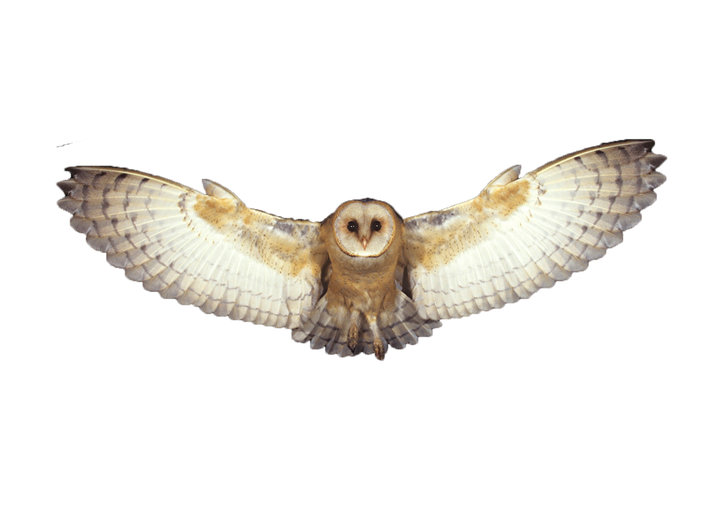Flying owl png :) by SummerWinterDreams on DeviantArt